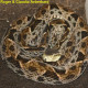 bothrops_asper_cr15
